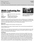 Alfalfa Leafcutting Bee cover