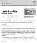 Banks Grass Mite cover