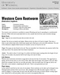 Western Corn Rootworm cover