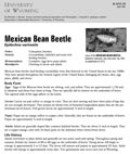 Mexican Bean Beetle cover