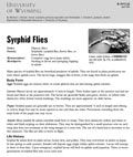 Syrphid Flies cover