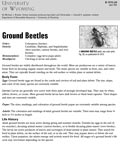 Ground Beetles cover