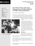 Lilac/Ash Borer: Management of Hardwood Borers of Trunks and Large Branches cover