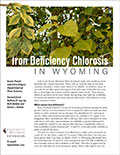 Iron Deficiency Chlorosis in Wyoming cover
