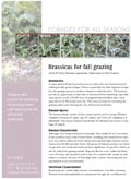 Brassicas for Fall Grazing cover