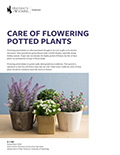 Care of Flowering Potted Plants cover
