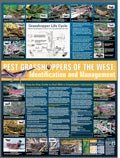 Pest Grasshopper of the West - Identification and Management Poster cover