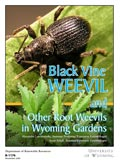 Black Vine Weevil and Other Root Weevils in Wyoming Gardens cover