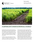 Is Growing Switchgrass Economically Feasible cover
