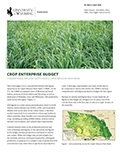Crop Enterprise Budget: Conventional Dryland Switchgrass cover