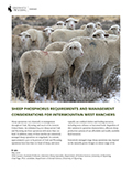 Sheep phosphorus requirements and management considerations for Intermountain West ranchers cover