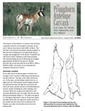 The Pronghorn Antelope Carcass cover