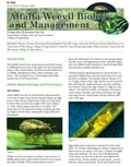 Alfalfa Weevil Biology and Management cover