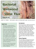 Bacterial Wetwood and Slime Flux cover