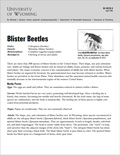 Blister Beetle cover