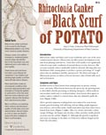 Rhizoctonia Canker and Black Scurf of Potatoes cover