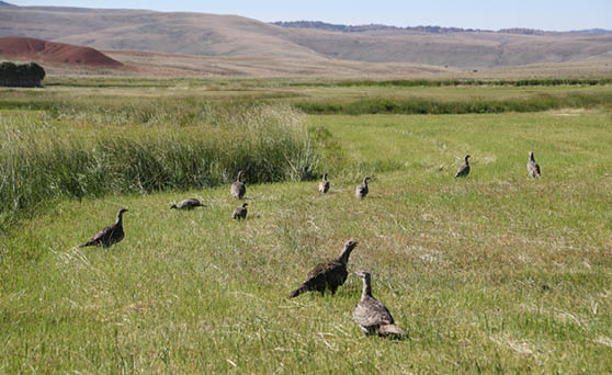 Landowner Guide to Sage-grouse Conservation in Wyoming: A Practical